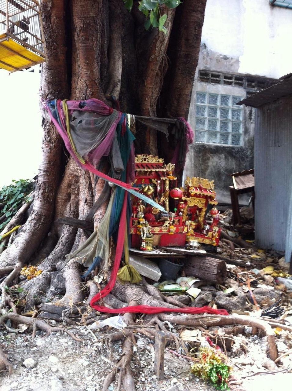 sacred tree, bangkok, thailand