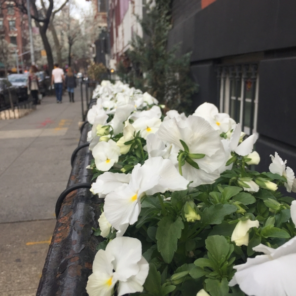 Those New York City flowers.