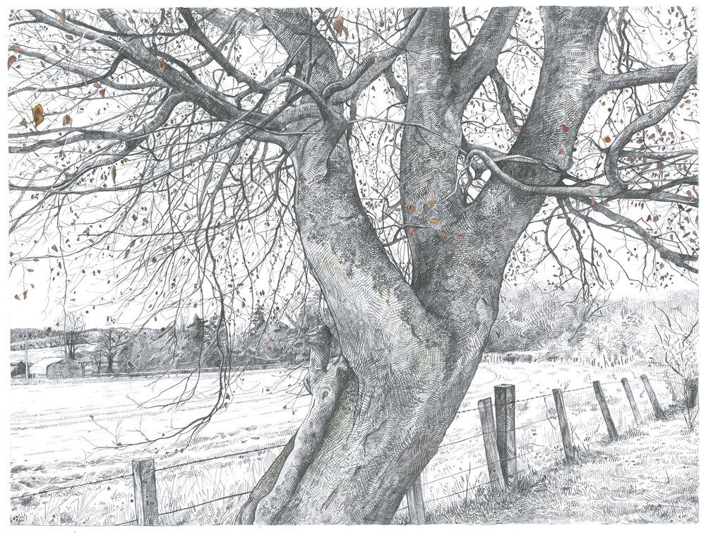 A Hard Frost.jpg