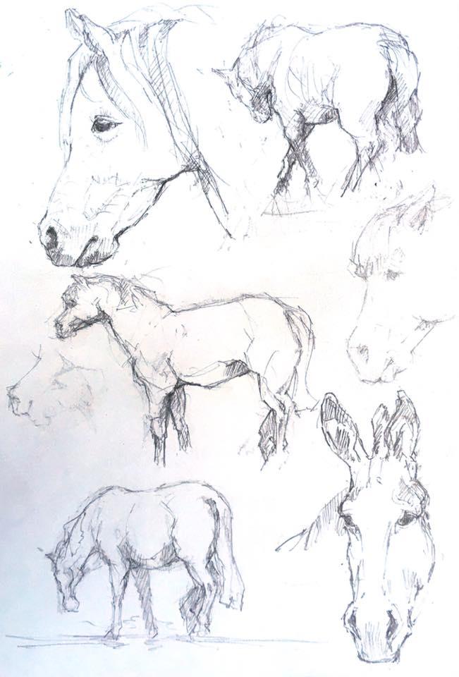 horse sanctuary.jpg