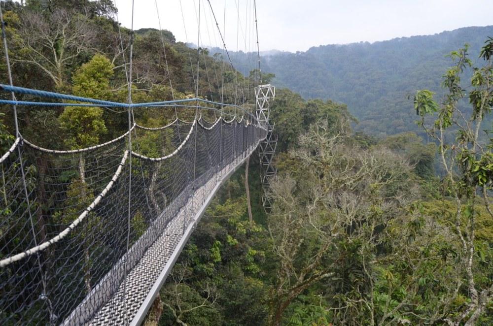 Canopy Walk, Nyungwe Forest