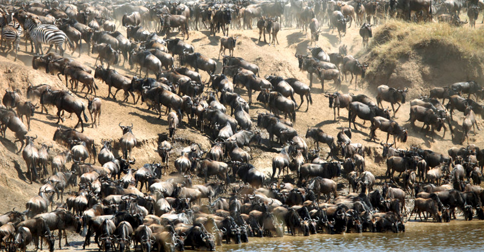 Great Wildebeest Migration, Kenya
