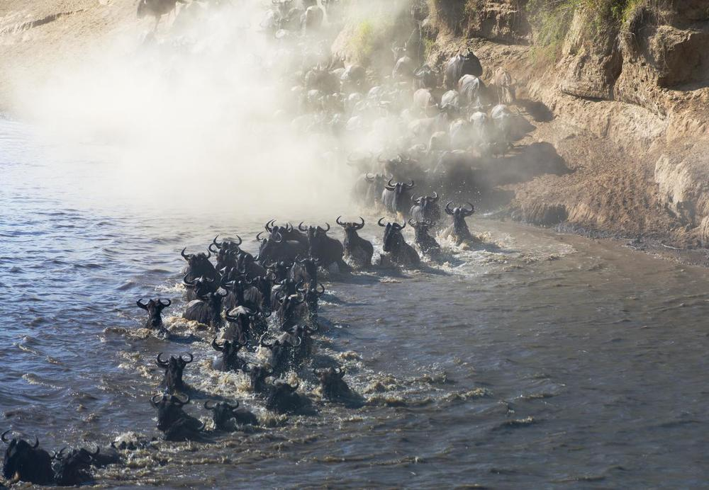 Migrating_wildebeest_on_the_Masai_Mara.jpg