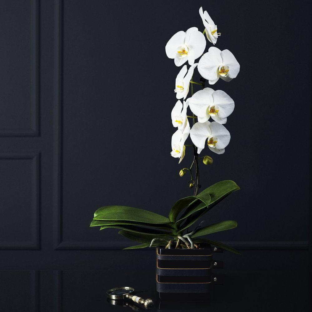 house-of-orchids_cover-images_01 copy.jpg