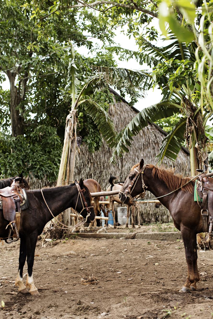 EliesaJohnson_Cuba_2016_0203.jpg