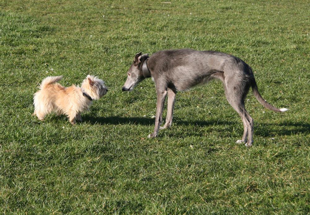 Bronte meets little Portia