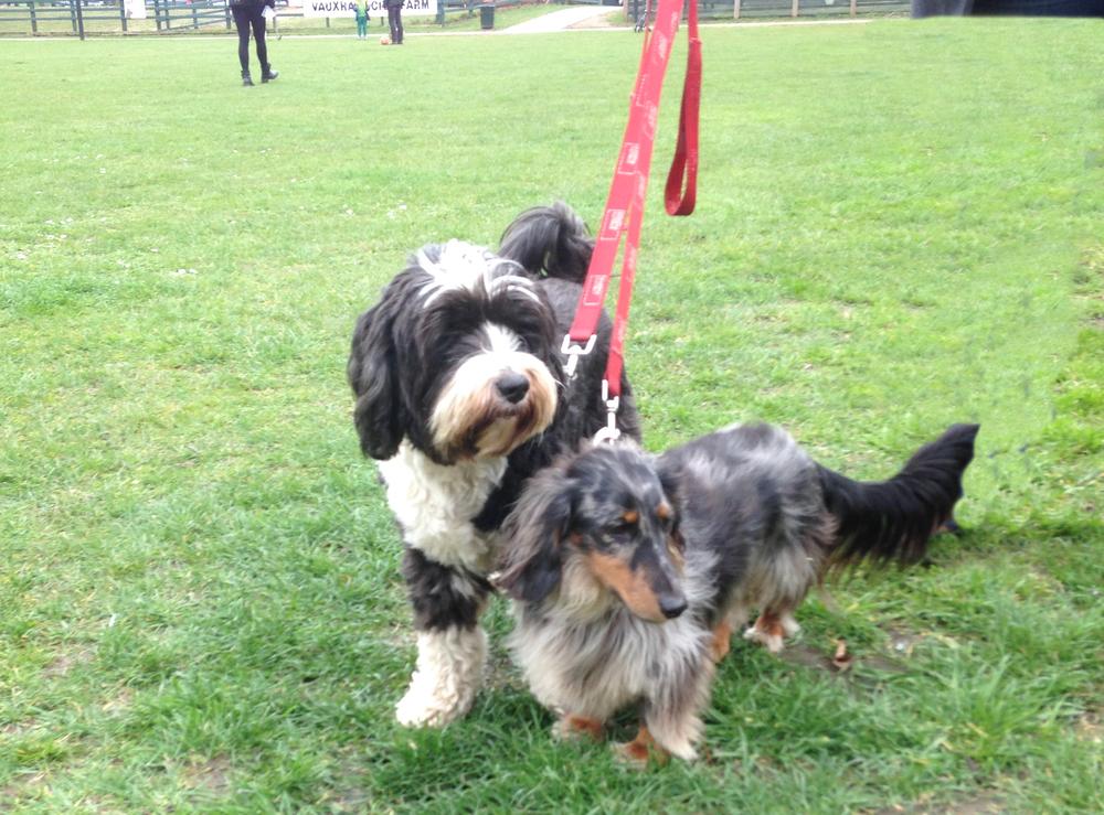 Buckley and Freddie