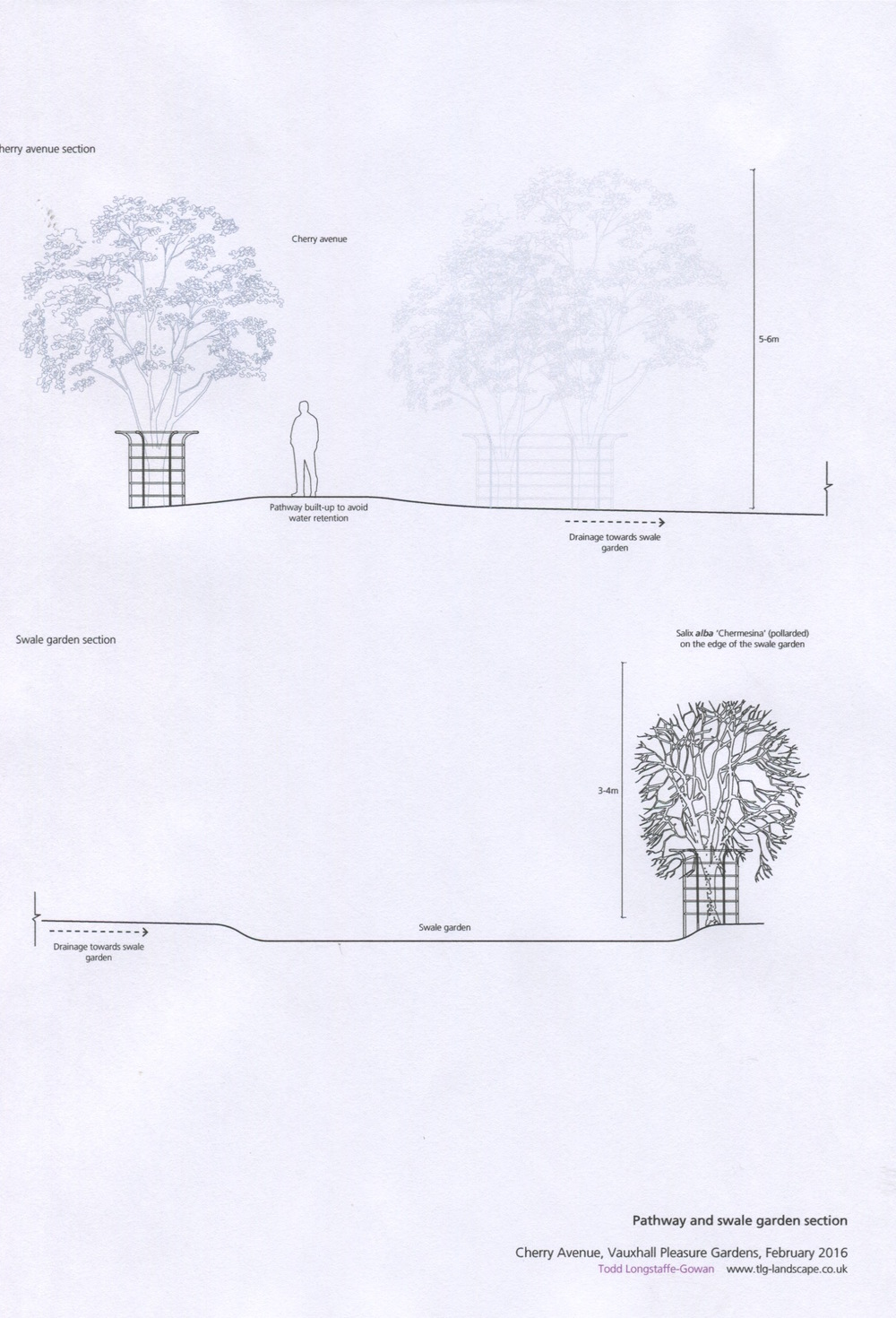 Raised path and tree size ( tree guards not approved as proposed)