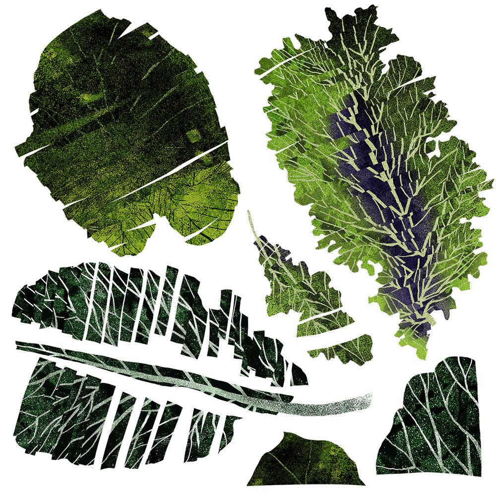 CITRIN-Taste-greens2.jpg