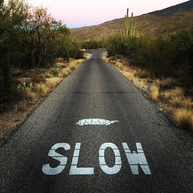 Cruising through Saguaro National Park in Tucson, AZ and came across these markings in the road - better than a red carpet. #❤️🐢🍷 #saguaronationalpark #slowturtle