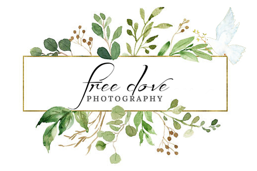 Free Dove Photography