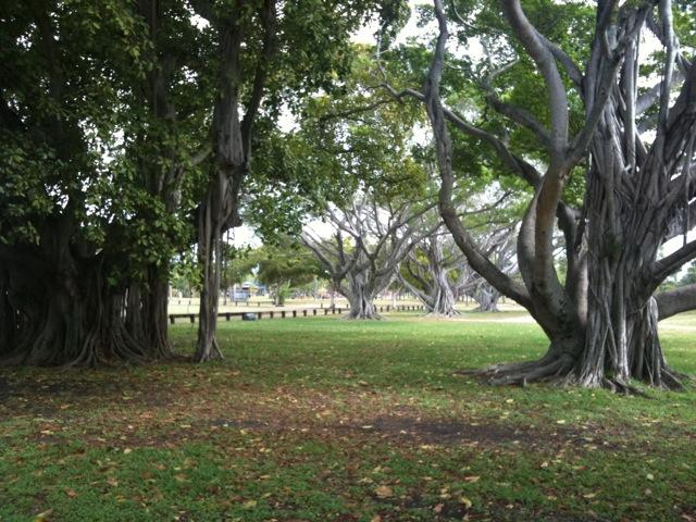 Victoria Park South