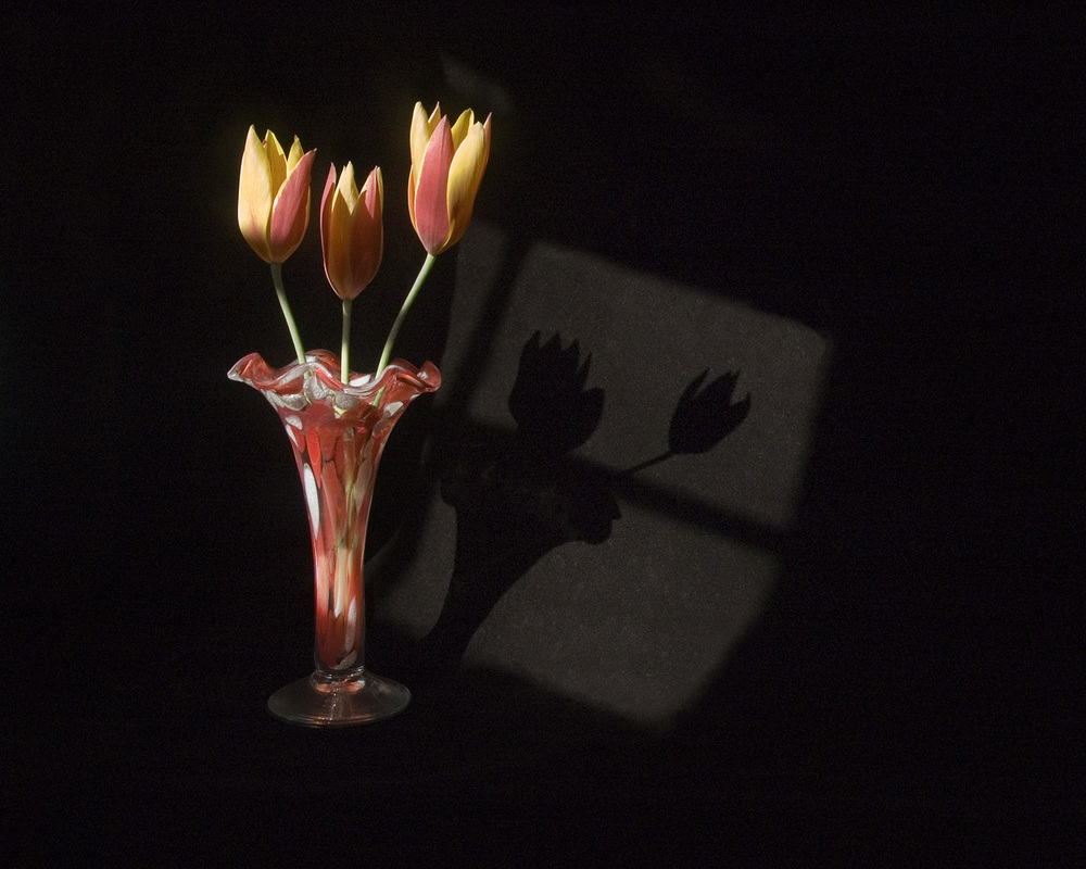 flaming tulips