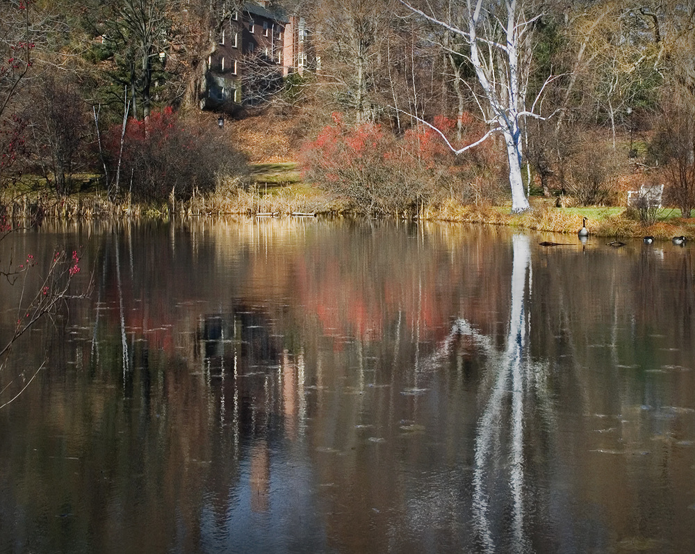 autumn pond at wellesley