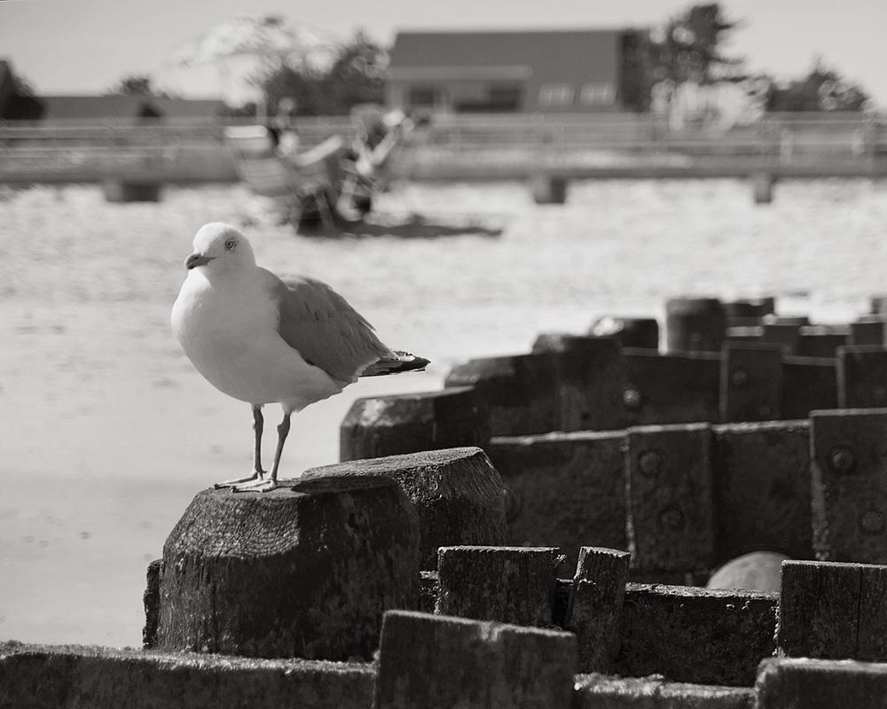 autumnal shore, 09/16/15