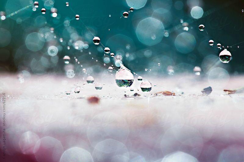 rainseed 5.jpeg
