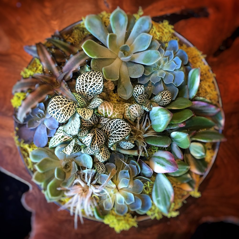 Life Would 'Suc' Without You teeming with succulents, reindeer moss, and polka dot plants.