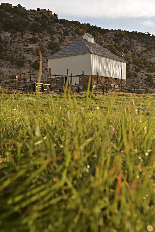 barn grass copy.jpg