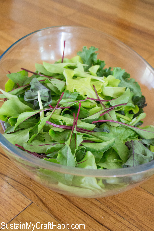 First harvest spring leaf salad- SustainMyCraftHabit.com