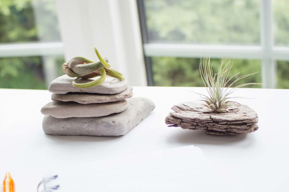 Nature made paperweight and new air plant home - SustainMyCraftHabit