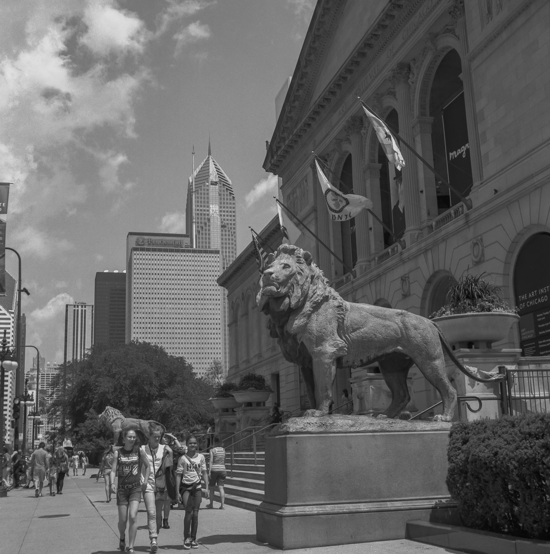 Two Lions Flank The Entrance of The Art Institute Of Chicago