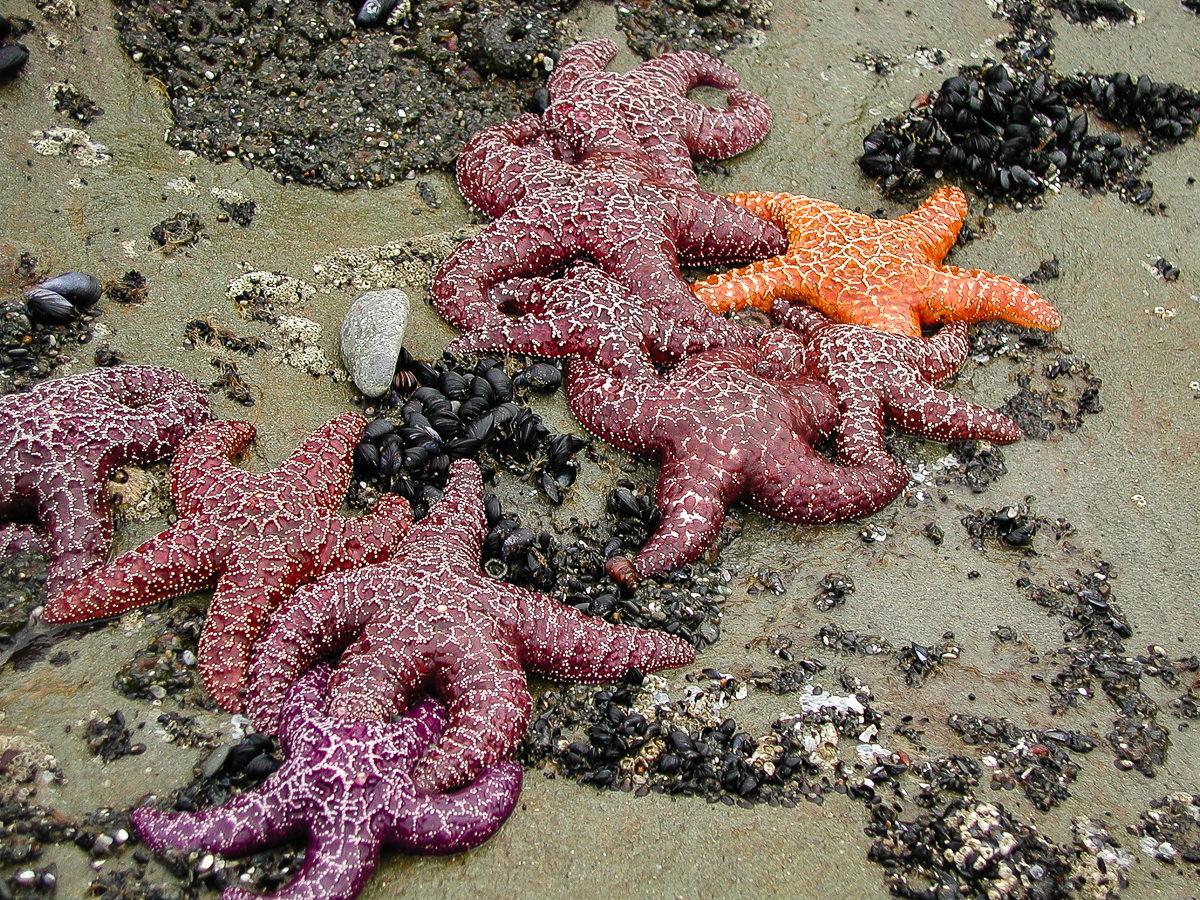Starfish Party