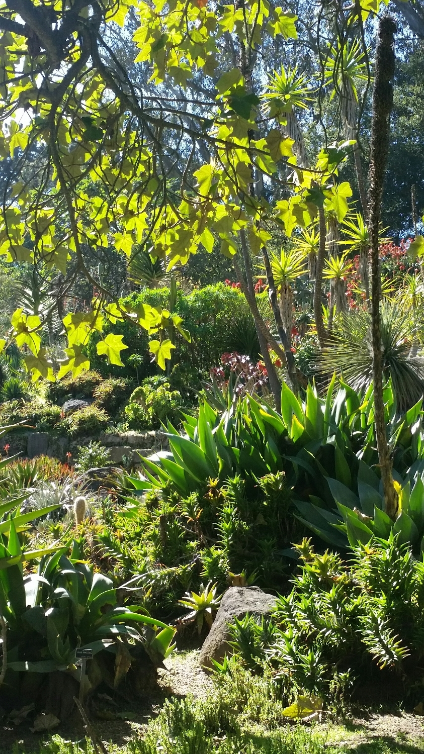 Golden gate park...botanical gardens. Layers of green and sunlight.