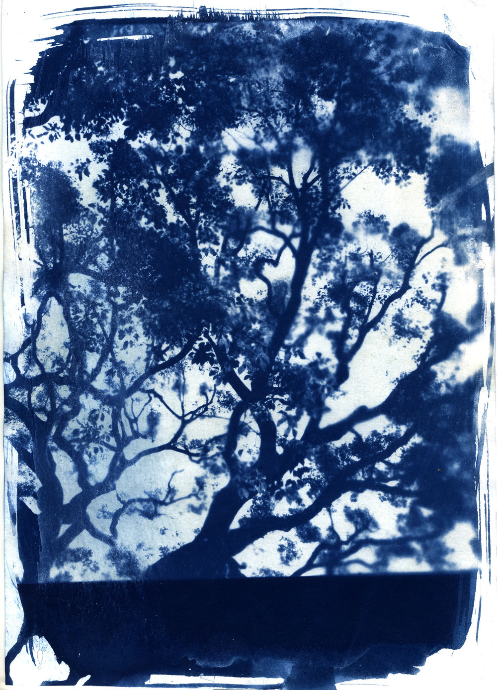 ARRcyanotype_tree72res.jpg