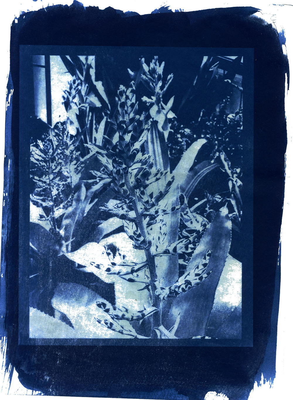 ARRcyanotype_tropic72res.jpg