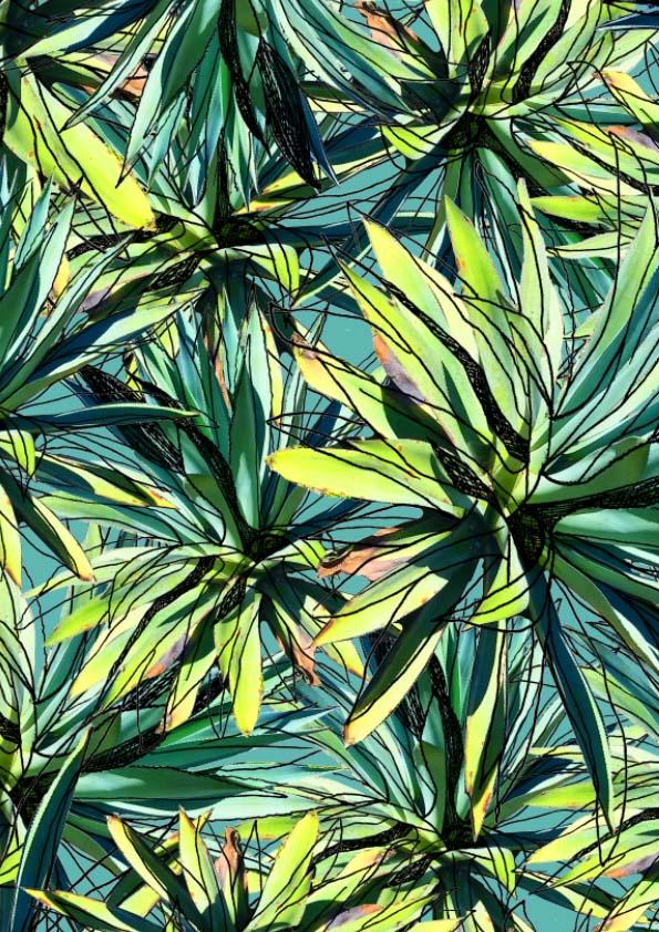 agave .jpg