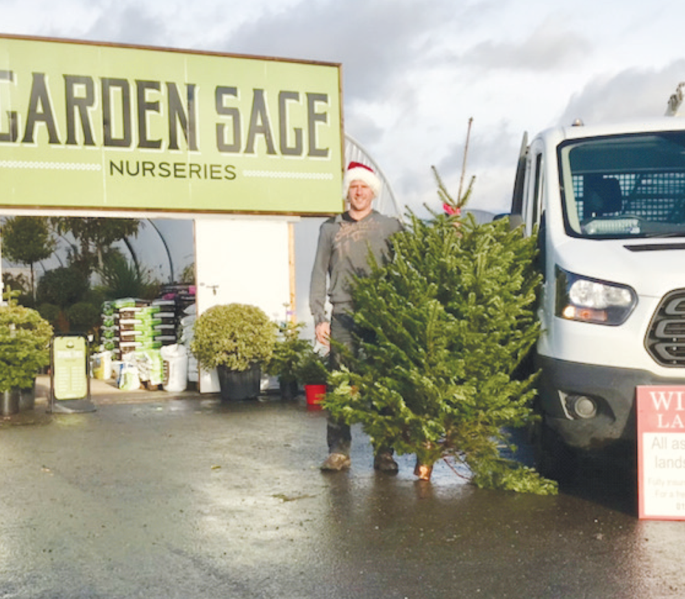 Paul Wilkinson, Christmas Tree Collection in Hurst