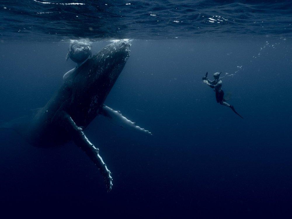 Michaela Skovranova -ocean wanderings