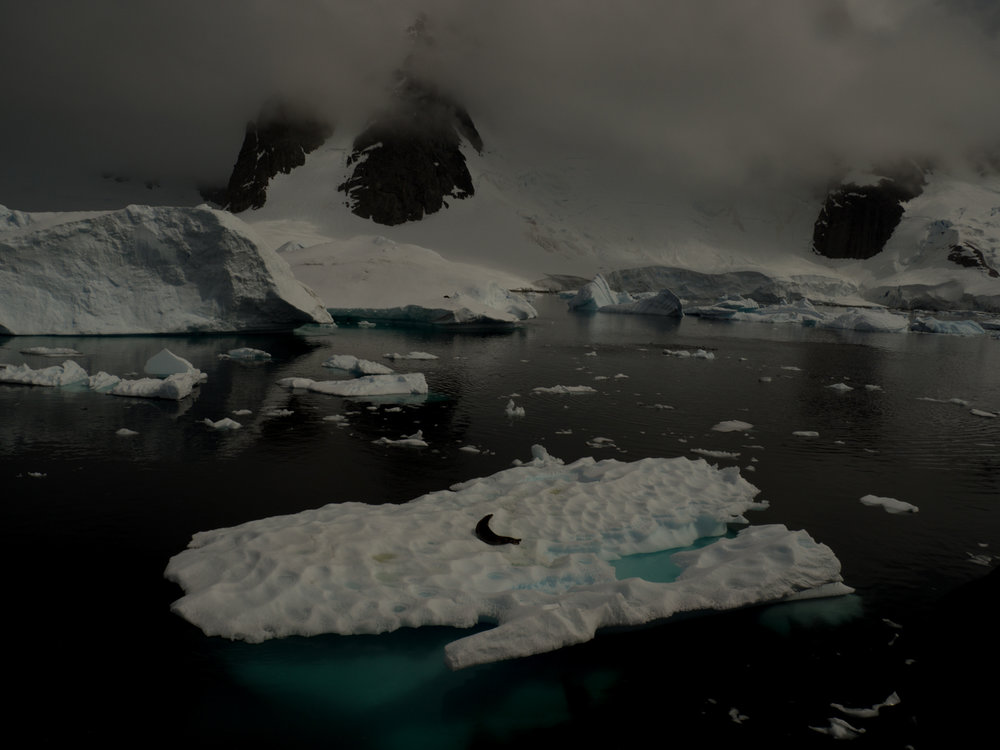 Michaela Skovranova - Antarctica
