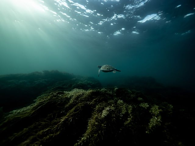 Ocean few hours ago 💙💫🐢 what more could I ask for 😍 #ocean #nature #wildlife #protectwhatyoulove #turtle #byronbay #australia #underwater #olympusinpired second photo of me being a happy turtle by @reignbowserpent
