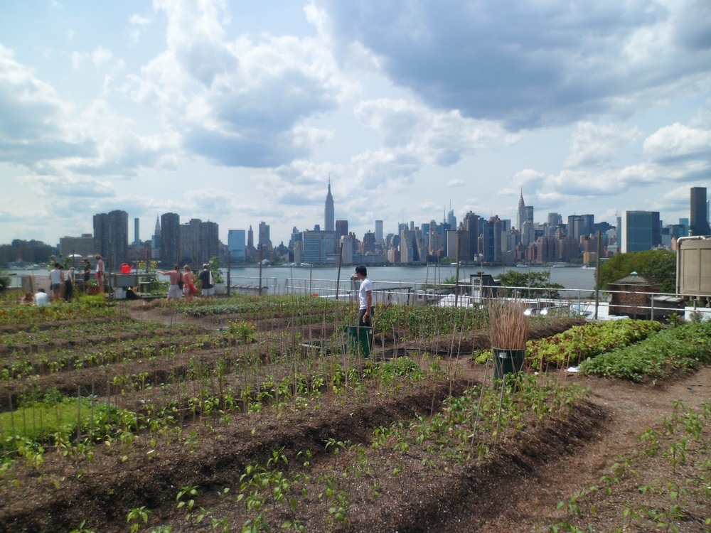 local-farm-nyc