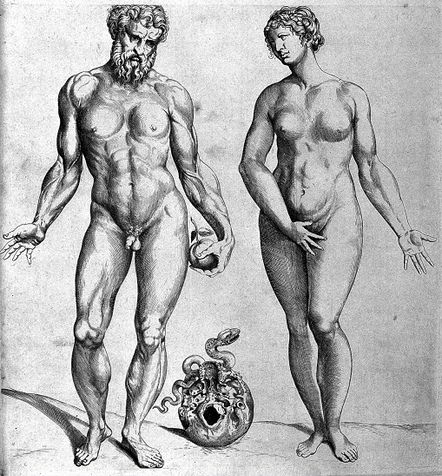 Source: By Thomas Geminus (1510-1562) after Vesalius [Public domain], via Wikimedia Commons