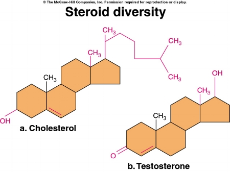 Steroid.jpg By Hyou at English Wikibooks (Transferred from en.wikibooks to Commons.) [Public domain], via Wikimedia Commons