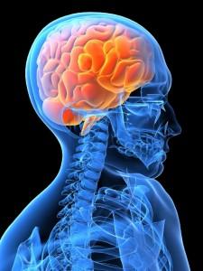 brain (480x640)