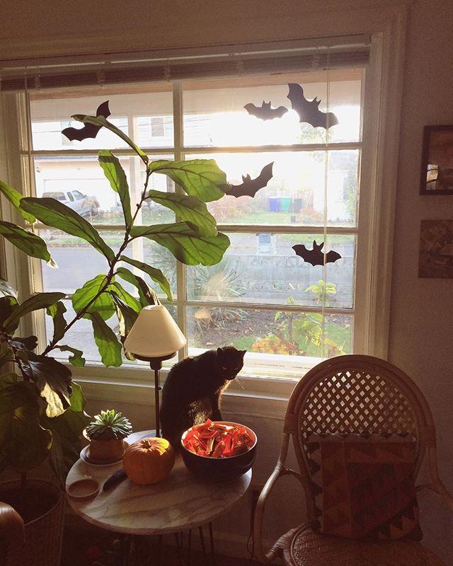 Pumpkin ✔️ Candy ✔️ Bats ✔️ Black Cat ✔️ HAPPY HALLOWEEN!