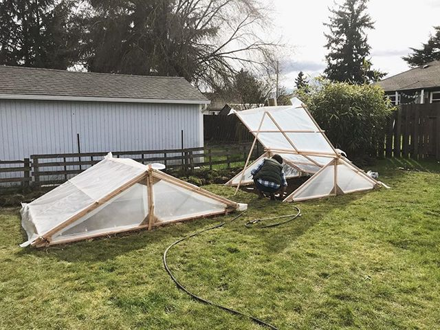 @keithandrewturner built me some green houses this weekend!! Hopefully I can grow some tasty vegetables to repay all his hard work 🤞🏻