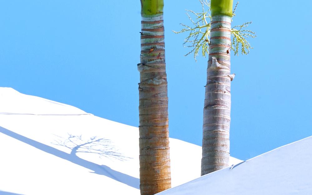 1 Hotel Miami Beach March 2015 (136c).jpg
