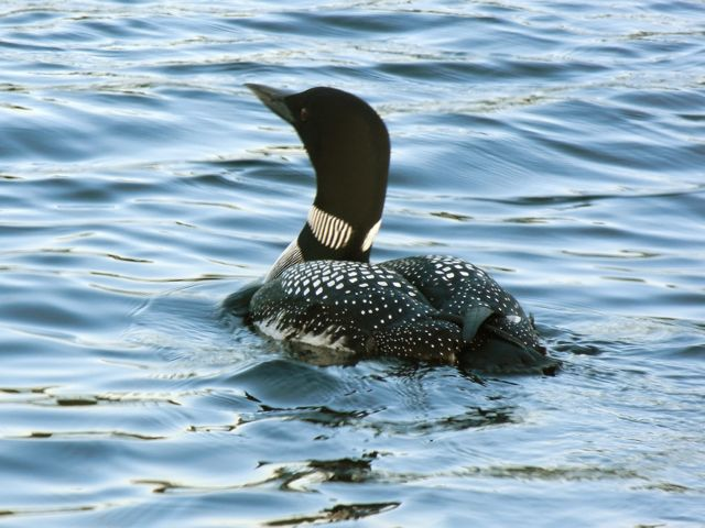 Copy of Loon Near Nawandyn Estate