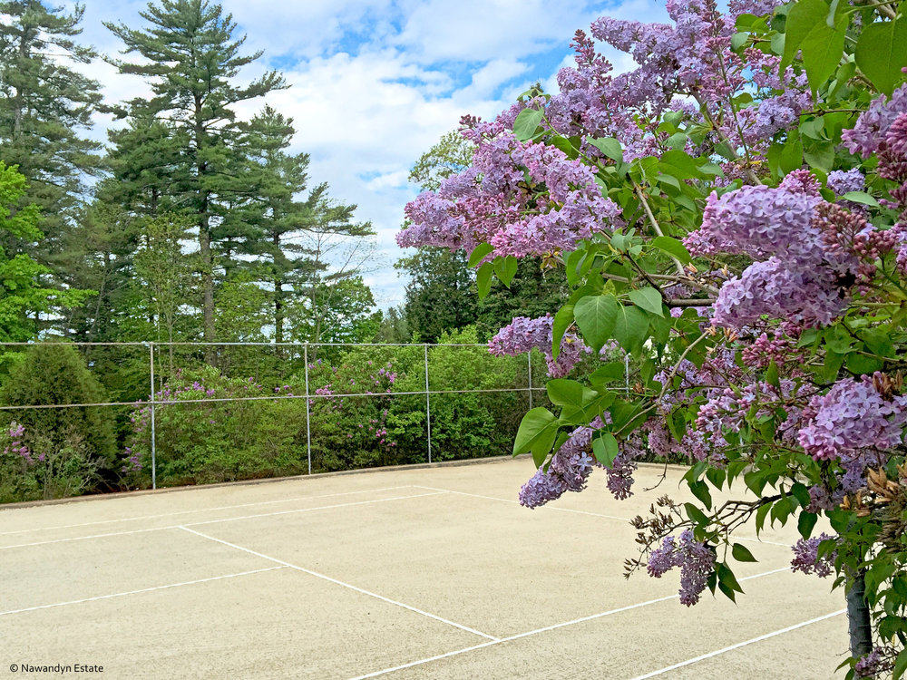 Lilacs surround tennis court
