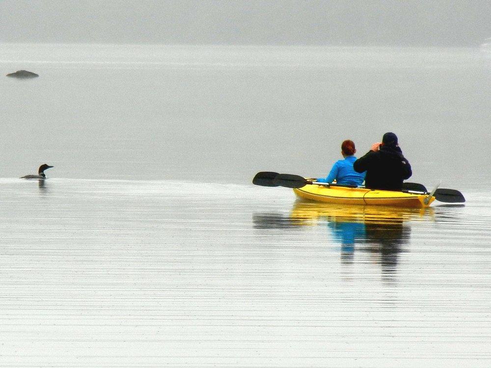 Kayak chasing Loon.jpg