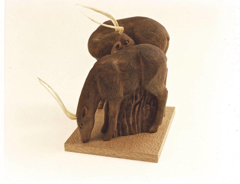 Antelope -2.jpg