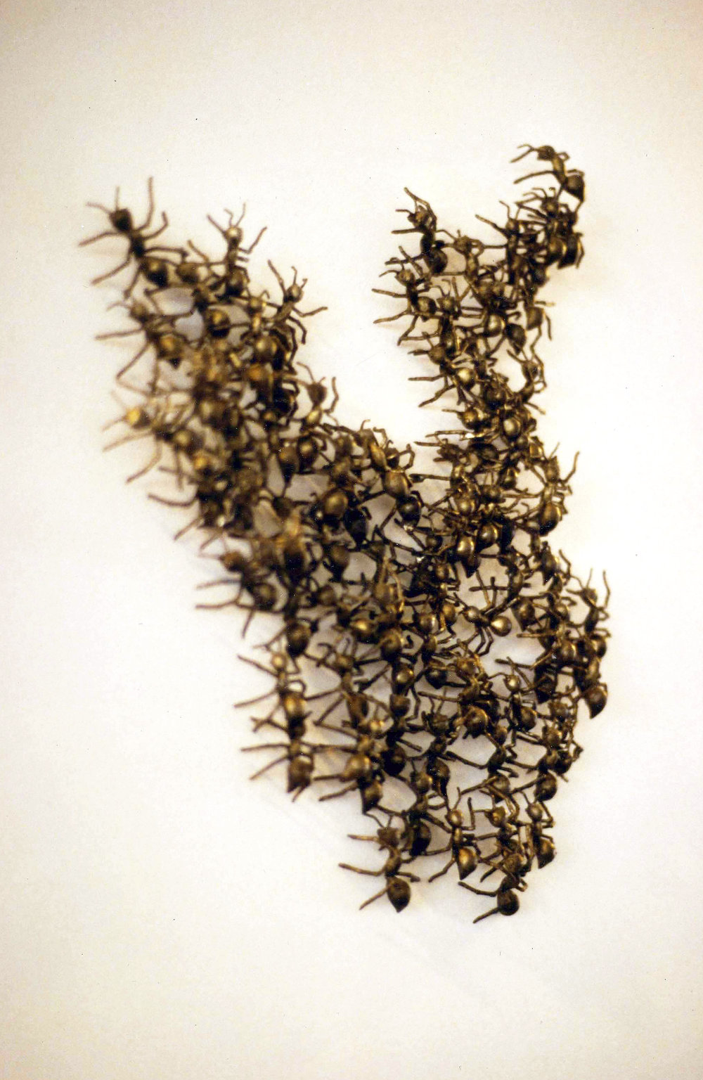 Ant Wall Sculpture - Bronze