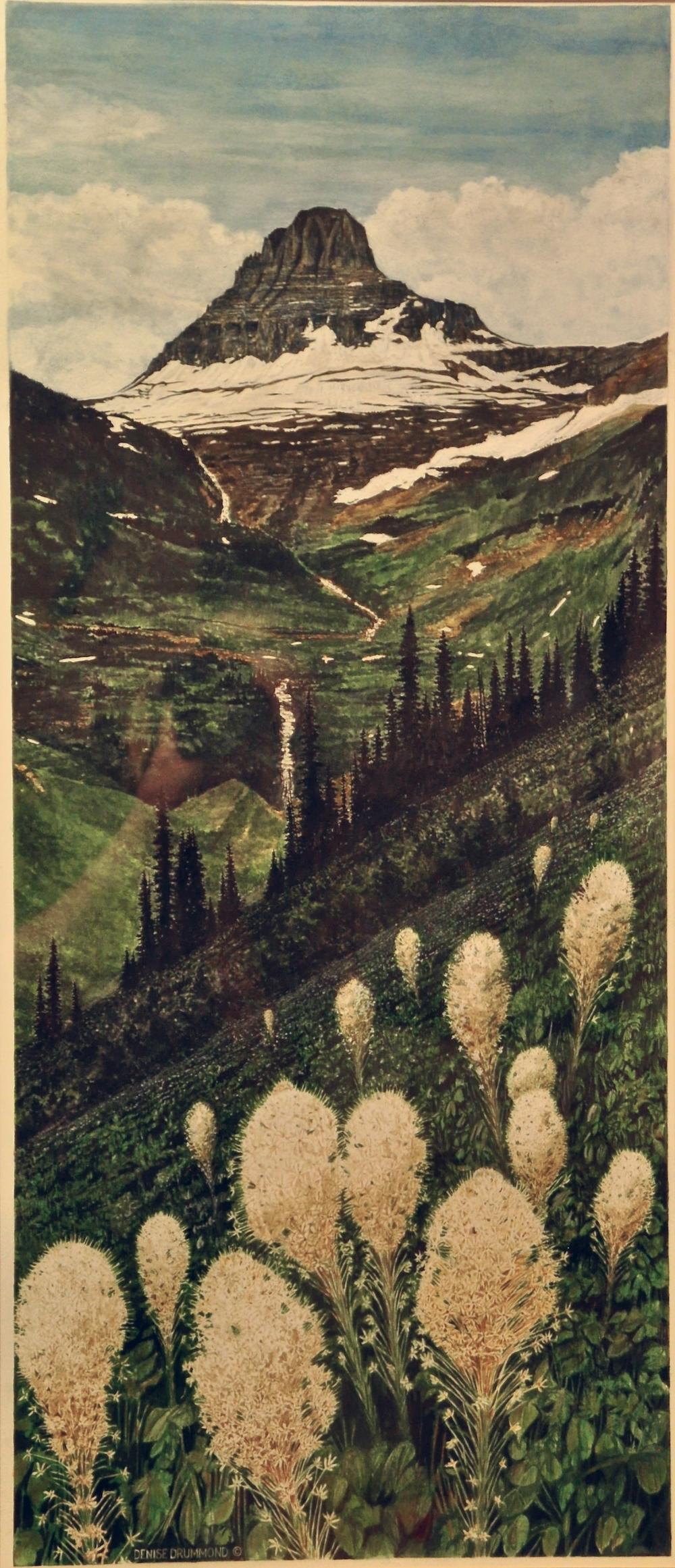 Glacier Beargrass/Glacier NP