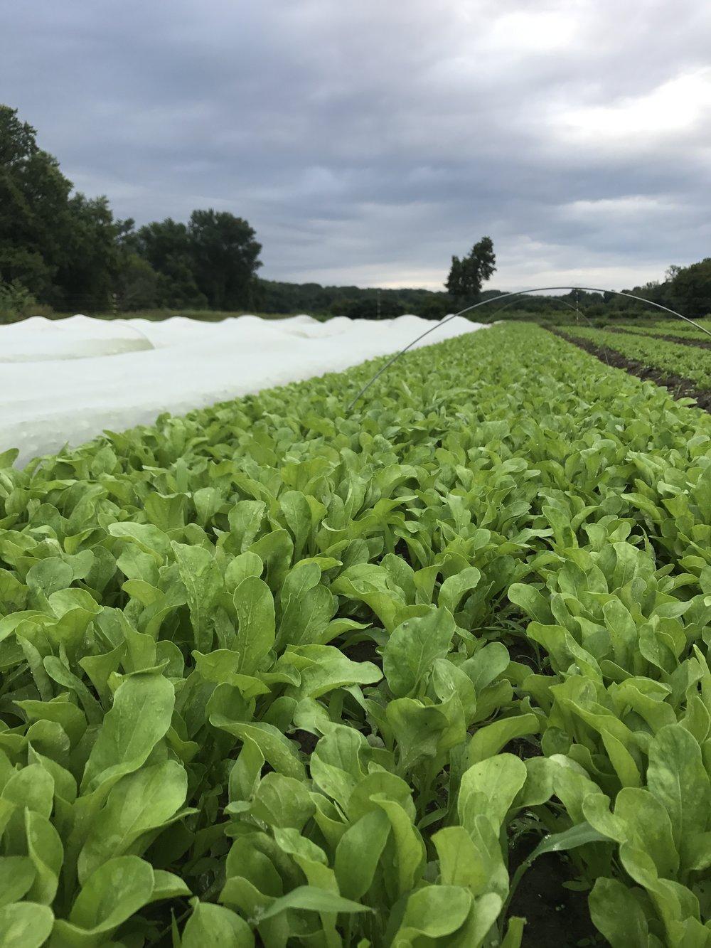 pitchfork farm grows the food -