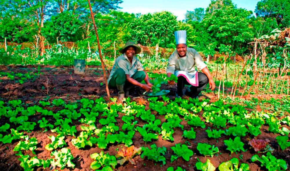 garden1 copy.jpg