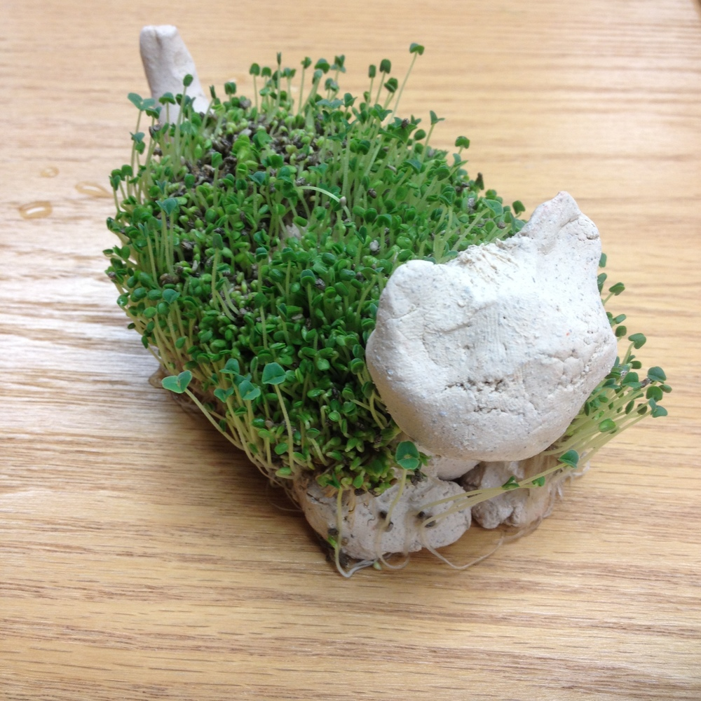 Ceramic Chia Pet